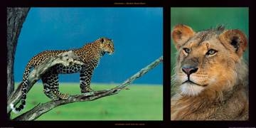 100x50 | Leopard and Young Leon ( Denis-Huot Michel et Christ )