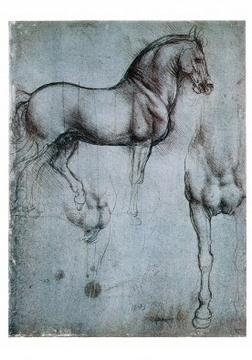 Reprodukce obrazu 35 x 50 / Studio di cavalli ( Da Vinci Leonardo ) + záruka 3 roky