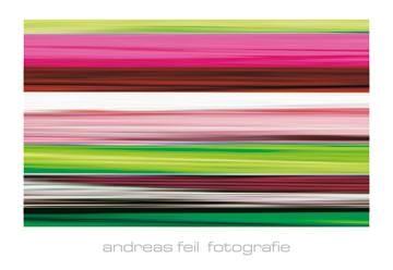 Reprodukce obrazu 138 x 95 / Fotografie II ( Feil Andreas )