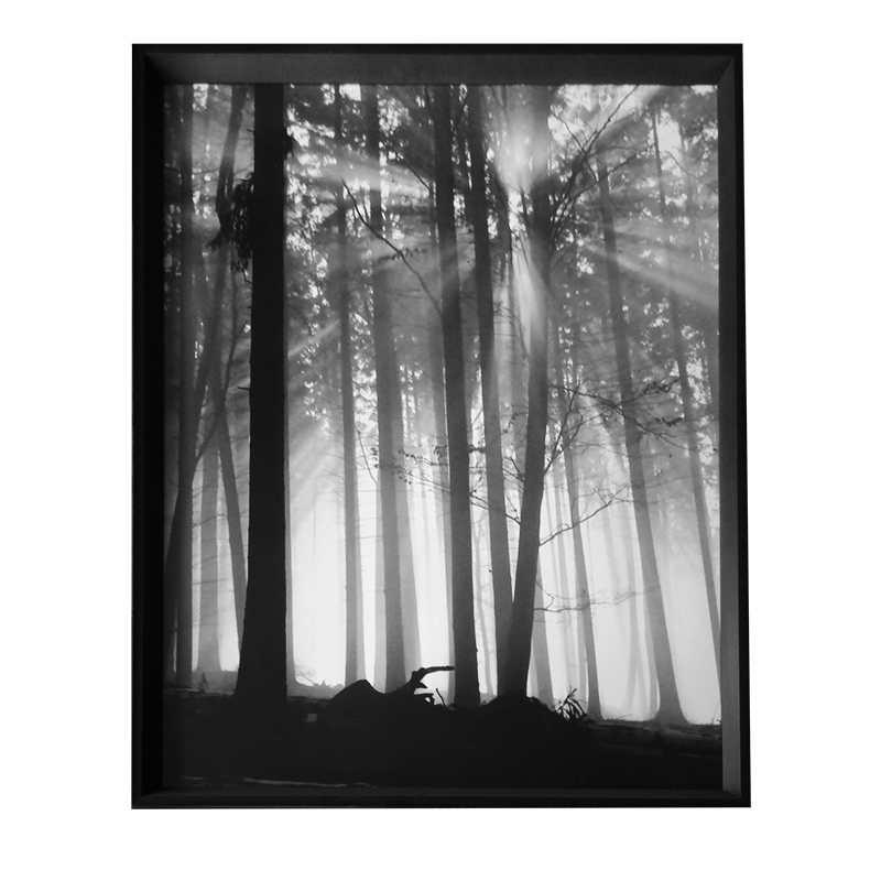 - Forest Dawn | 66.8x86.8